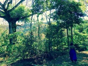 Ceiba Artsy walk